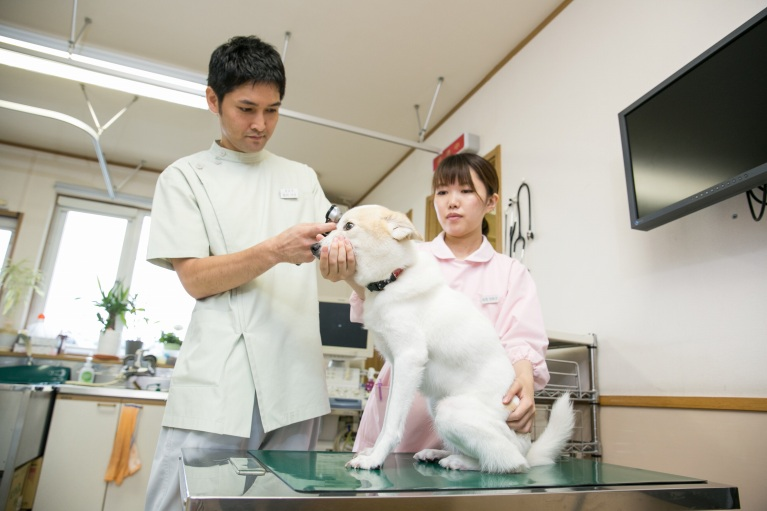 犬の予防接種について